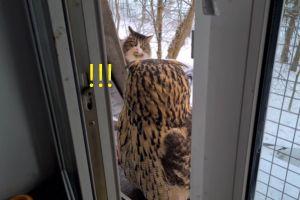 ▲貓頭鷹緩緩轉頭,突然驚見有一隻貓咪在看自己!(圖/tiktok帳號nika_zubra)