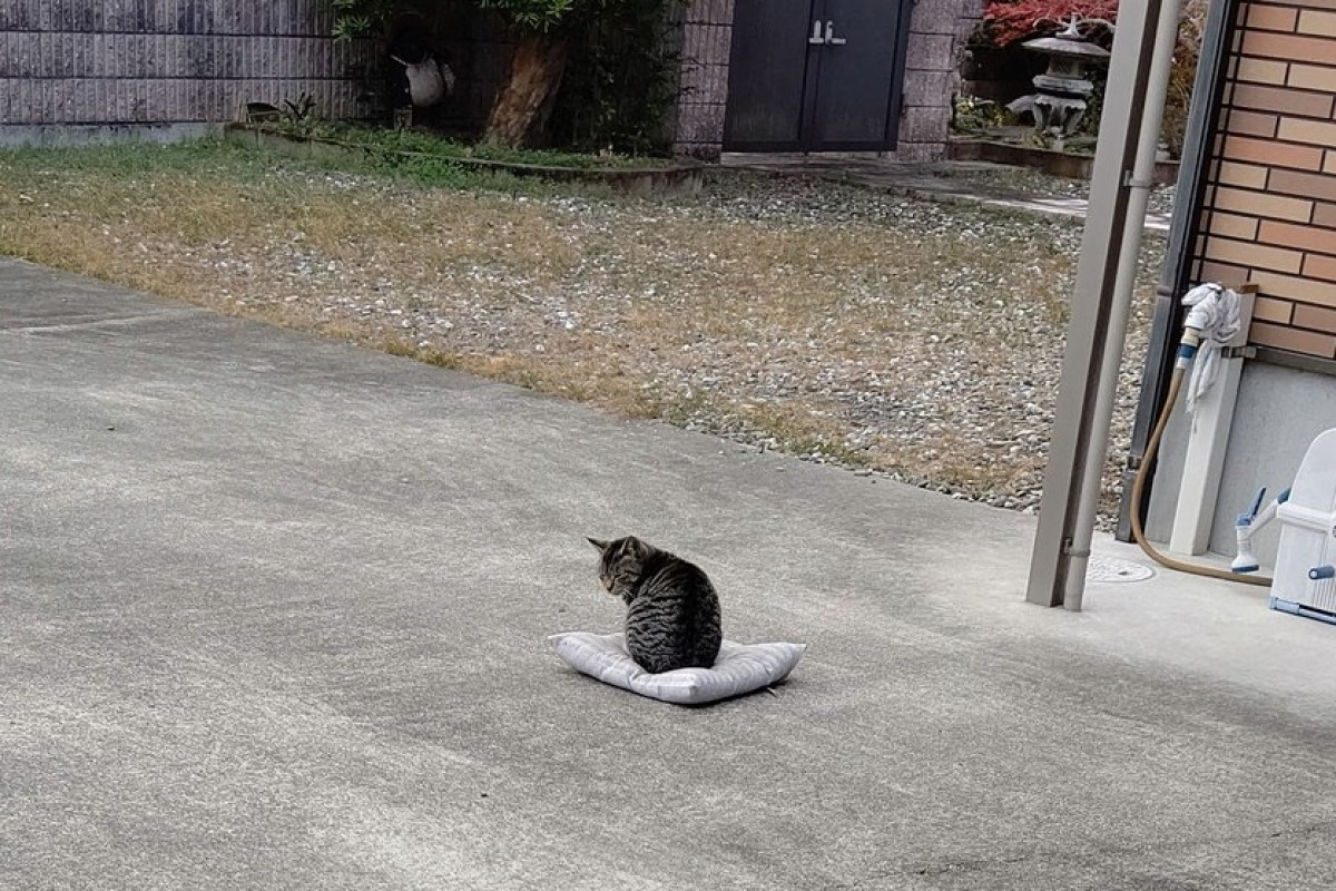 坐墊被吹走 推主去拯救見「貓咪石敢當」笑:該怎麼辦?