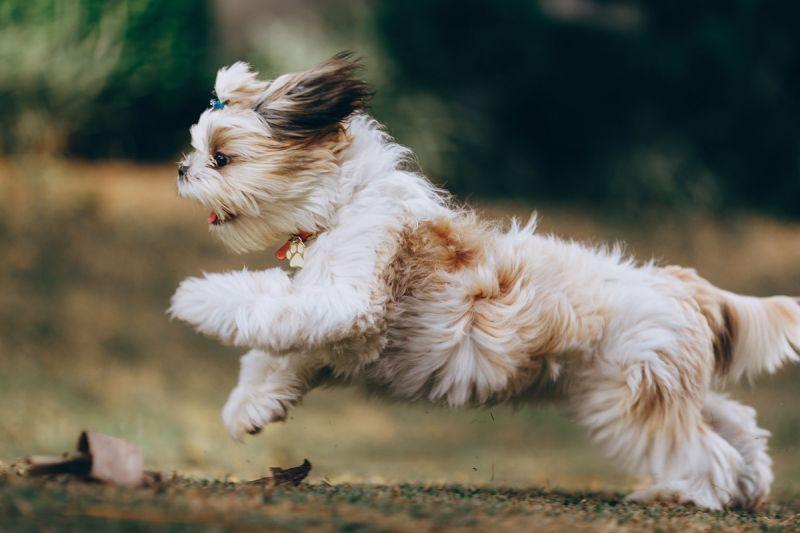 ▲老年的狗狗關節漸漸退化,要多補中鈣質。(圖/pexels)