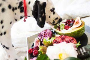 ▲狗狗的飲食控制非常重要,可以購買市面上可靠的老年犬專門犬糧。(圖/pexels)
