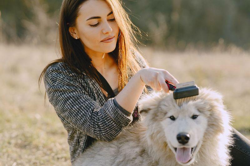 ▲梳毛不僅可以增進寵物與飼主的感情,也能趁機檢查寵物的身體狀況。(圖/pexels)