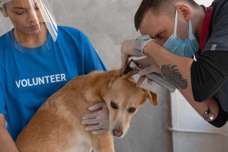 ▲帶狗狗做定期檢查,不僅能提前發現疾病及早治療,定期施打預防針對狗狗的健康也非常重要。(圖/pexels)