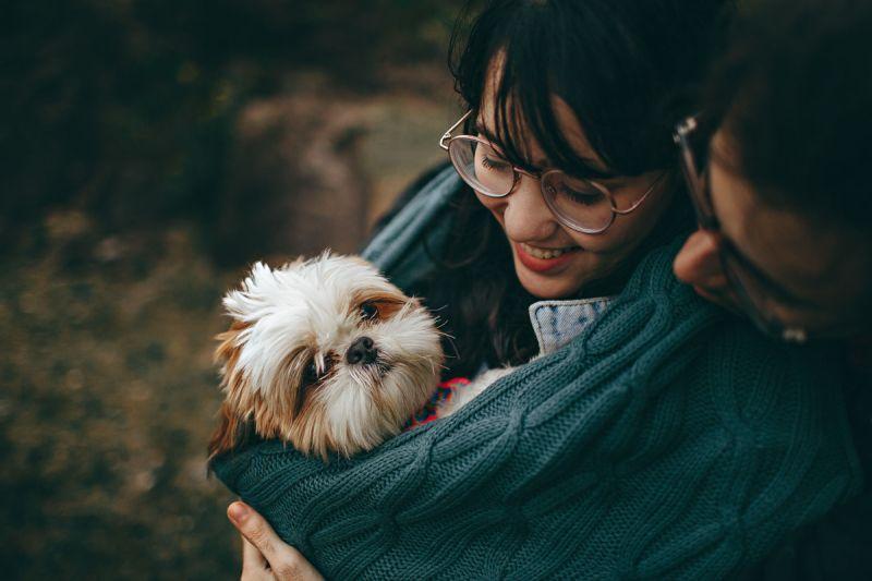 ▲細心觀察老年狗的身體狀況,用心記錄每天飲食睡眠等日常,讓毛小孩健康快樂地邁向老年。(圖/pexels)