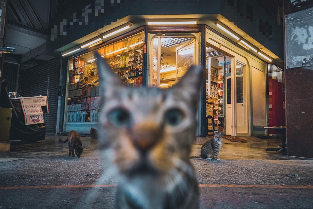 ▲網友在街頭取景時,突然遇見一隻親人虎斑貓亂入搶鏡頭!(圖/IG@oulic.620授權提供)