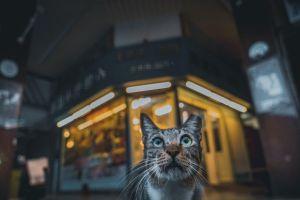 ▲虎斑貓:聽說你在拍照?(圖/IG@oulic.620授權提供)