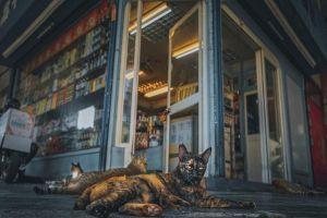 ▲Lic表示附近的貓咪都非常親人。(圖/IG@oulic.620授權提供)