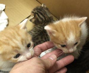Pobre Cuatro gatos pobres llegaron a la casa de Netizen.  (Foto / cuenta de Twitter: pinkribbon0215)