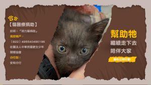 ▲救助小黑貓的醫療手術費用,培力園望各方能幫忙。(圖/新北市少年培力園授權)